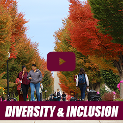 diversity and inclusion webinar